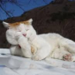 Mèo Méo Meo